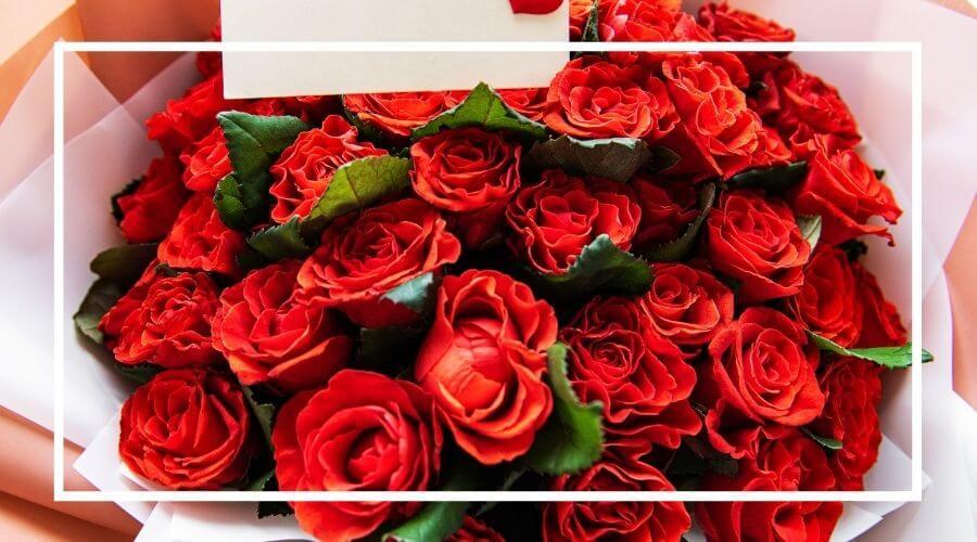 sopek-rdecih-vrtnic